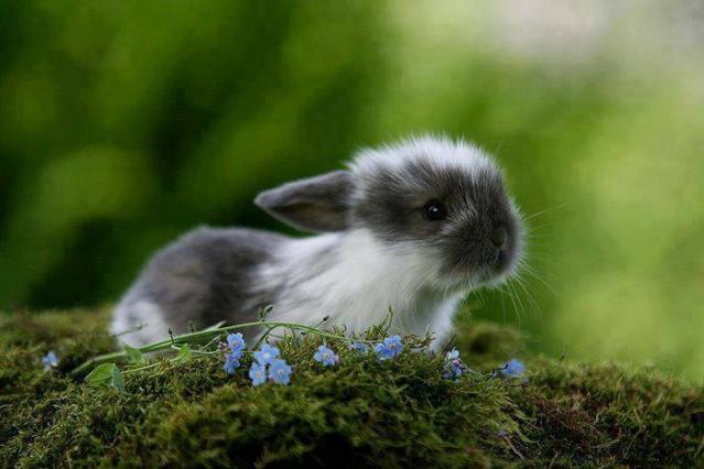 seniorennet grappig of schattig lief klein konijntje