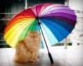 met mijn lievelingsparaplu...