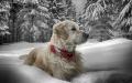 leuk in de sneeuw....