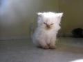 ik kan héél boos kijken!