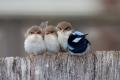 jullie worden te groot om onder moeders vleugels te blijven....