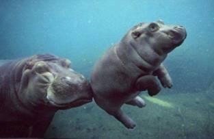 komaan zwemmen!