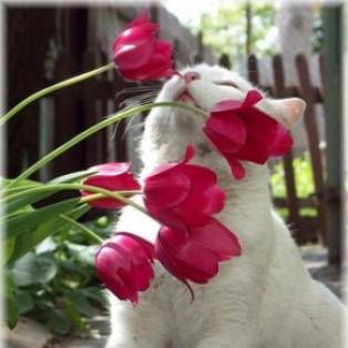 tulpen uit Amsterdam...