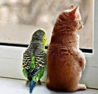 gaan we buiten of niet???