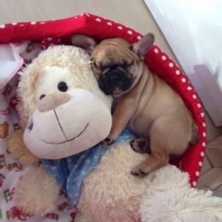 mijn knuffeltje