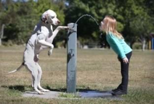 goed opgevoede hond!