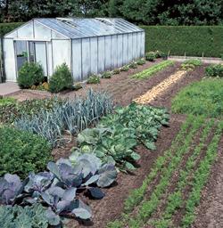 biologisch tuinieren moestuin