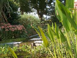 De vijver dossier organisch tuinieren seniorennet website