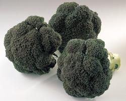 Dossier Vitaliteit - Broccoli