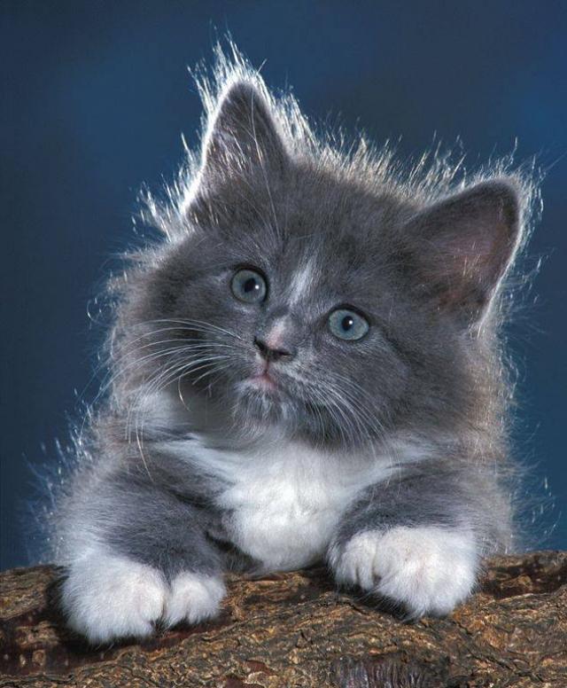 Новым, котята анимации картинки