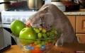 wie zegt dat ik geen fruit eet???