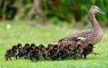 kroostrijk gezin....