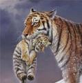mama, gij hebt scherpe tanden....