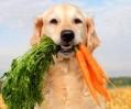gezonde hond!