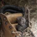 er zit een muis in mijn schoen...