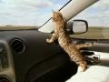 waar gaan we naartoe vandaag???