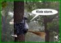 stormweer...