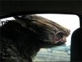 ik hou van de wind in mijn haren....