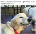 wanneer het baasje zegt : wie is die brave hond....IKKE!!!!
