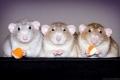 ook muisjes kunnen lief zijn...