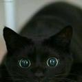 wat ziet mijn oog???