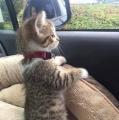 wat zie ik nu daar buiten???
