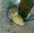 kom, ik zal je beschermen...