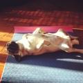 yoga voor de hond