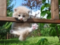 een circus kitten?