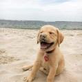 vóór 9u mag ik nog op strand!