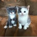 twee schatjes