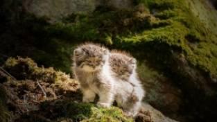 kleine wilde katten
