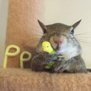 deze squirrl is mijn huisdier!
